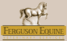 Ferguson Equine Veterinary Services